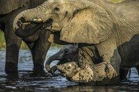 Eine Elefantenkuh und ihr Kalb nehmen gleichzeitig einen erfrischenden Schluck Wasser.