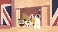 L-R: Prunella Pug, Clarissa, Clarissa