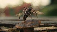 Scott Lang/Ant-Man (Paul Rudd)