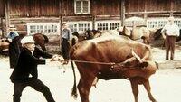 Michels Vater (Alan Edwall) hat keine Freude mit der neugekauften Kuh. Er schafft es nicht, sie zu zähmen.