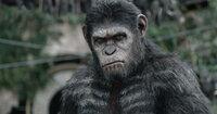 Kann Caesar (Andy Serkis) den alles entscheidenden Kampf zwischen Menschen und Affen noch verhindern?