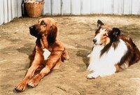 Lassie und Billys Hund Jason haben sich inzwischen angefreundet...