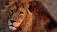 In der Tierwelt gibt es so manch ungewöhnliches Verhalten. Und die Partnersuche wird dadurch auch nicht immer erleichtert.