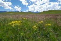 """Universum: """"Im Bann der Drachenberge"""", Ein Portrait des höchsten Gebirges im südlichen Afrika. Die Drakensberge sind ein südafrikanischer Nationalpark und Weltnatur- und -kulturerbe. Die Hauptdarsteller des Films sind ein Trupp von Pavianen und eine Familie von Elen-Antilopen. Beide Arten ziehen mit den Jahreszeiten und dem verfügbaren Nahrungsangebot Jahr für Jahr aus den Ebenen am Fuß der Drakensberge hinauf in die Gipfelregion, wo sie Kälte, Stürme und heftige Unwetter erwarten. Der Film wird im Speziellen ein Elen-Kalb ein Jahr lang auf seinem Weg durch die Bergwelt und beim Heranwachsen begleiten."""