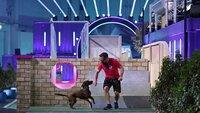 """Alexander mit seinem Bayerischen Gebirgsschweißhund """"Franziska"""" in Runde 1."""