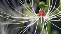 Tropische Orchideen werden hauptsächlich in Asien ausgegraben und illegal in die ganze Welt verkauft.