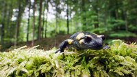 Ein Salamander  Die Verwendung des sendungsbezogenen Materials ist nur mit dem Hinweis und Verlinkung auf TVNOW gestattet.; Ein Salamander  Die Verwendung des sendungsbezogenen Materials ist nur mit dem Hinweis und Verlinkung auf TVNOW gestattet.