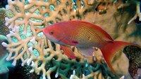 Ein Goldfisch  Die Verwendung des sendungsbezogenen Materials ist nur mit dem Hinweis und Verlinkung auf TVNOW gestattet.; Ein Goldfisch  Die Verwendung des sendungsbezogenen Materials ist nur mit dem Hinweis und Verlinkung auf TVNOW gestattet.