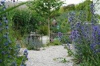 Ein Garten des Nordens mitten im Mostviertel - diesen Traum hat sich Markus Burkhard verwirklicht. Inspiriert von der Herkunft seiner Frau Cosima - sie ist halbe Schwedin - entstand hier im westlichen Niederösterreich ein Naturgarten. Die Idee hinter dem Garten des Nordens ist es, Bilder, die man aus der skandinavischen Natur und Landschaft kennt, im Garten auferstehen zu lassen. Hier brummt und summt es, denn Wildbienen, Hummeln, Schmetterlinge und Vögel bekommen in diesem besonderen Garten einen Rückzugsort. Wie man mit dem Alpenveilchen ein attraktives und pflegeleichtes Herbstkisterl zaubert, zeigt Biogärtner Karl Ploberger bei seinen Gartentipps.