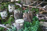 Schwammerl aus dem eigenen Garten? Wie man sich einen eigenen Pilzgarten anlegt, zeigen die Gärtner und Gärtnerinnen der Garten Tulln.