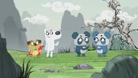 Die beiden Pandageschwister streiten sich um das letzte Bambusblatt.