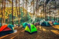 Camping and tent under the pine forest in sunset