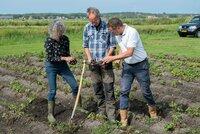 Versuchsfeld auf der niederländischen Insel Terschelling: Welche Kartoffelsorten kommen gut mit Salz zurecht?