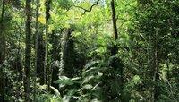 Regenwalddickicht.