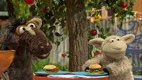 Pferd und Wolle freuen sich auf ihre leckeren Möhren-Burger.