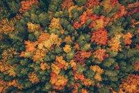 Indian Summer: Nirgendwo sonst ist der Herbst so schön wie in Kanada.