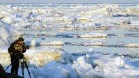 Vier Monate verbrachte der Tierfilmer Uwe Anders auf der Wrangelinsel in Russlands Arktis. Weitere Fotos erhalten Sie auf Anfrage.