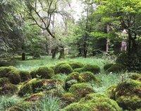 Mooshügel im Soonwald.