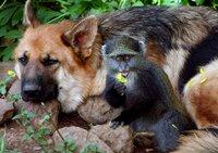 Bahati mit seinem Freund Spike, dem Schäferhund.