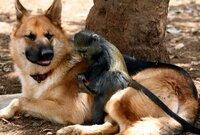 Hundereiter und sein Freund Spike.