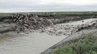 Auf ihrem Weg nach zum Kara-See müssen alle, auch die Rentiere, mehrere Flüsse überqueren.
