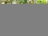 Die Passagiere Tobias Schaller, Andre Pohlai, Anne Hoffmann, Linda Wellmann (von links) im Dschungel auf Bora Bora bei ihrem Ausflug zum Tal der Könige mit Guide Tama (links).