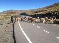 Einsam ist es am höchsten Punkt der Transoceánica auf 4.725 Meter. Nur ein Hirte mit einigen Dutzend Lamas kreuzt den Asphalt.