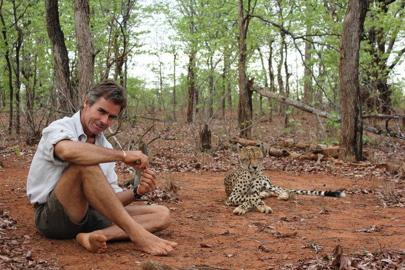 Allein unter Geparden