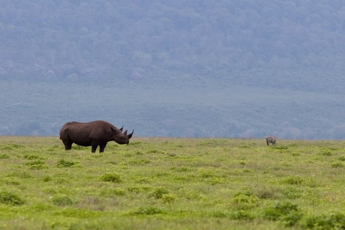 Wild Life: Abenteuer in der Serengeti