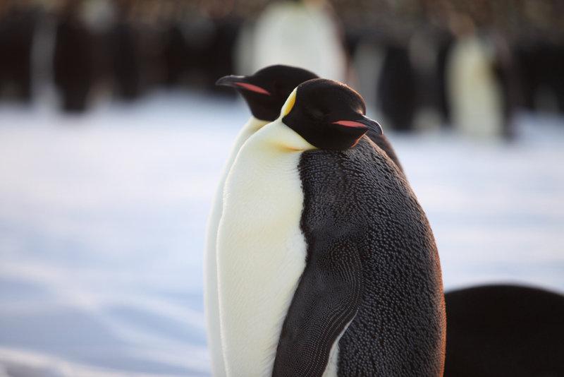 Pengi und Sommi: Die neue Reise der Pinguine