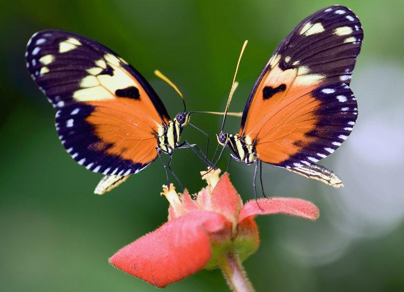 Pollen - Wings of Life