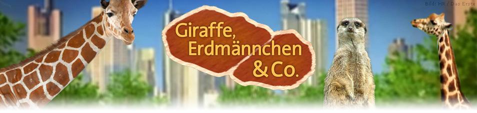 Giraffe, Erdmännchen & Co. Bilder – TV Wunschliste