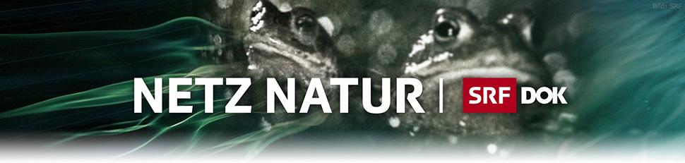 Netz Natur