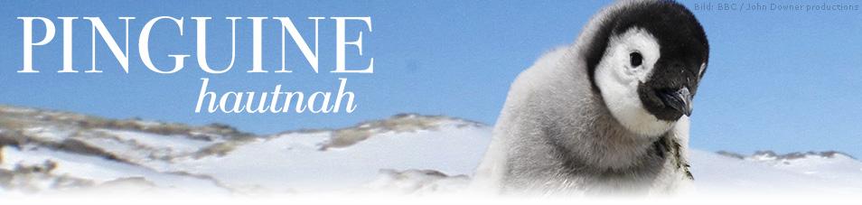 Pinguine Hautnah Stream