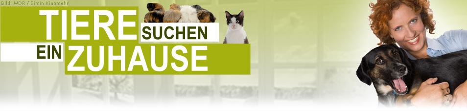Tiere suchen ein Zuhause