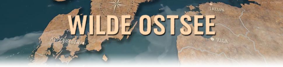 Wilde Ostsee