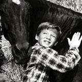 Fury Pferd Film