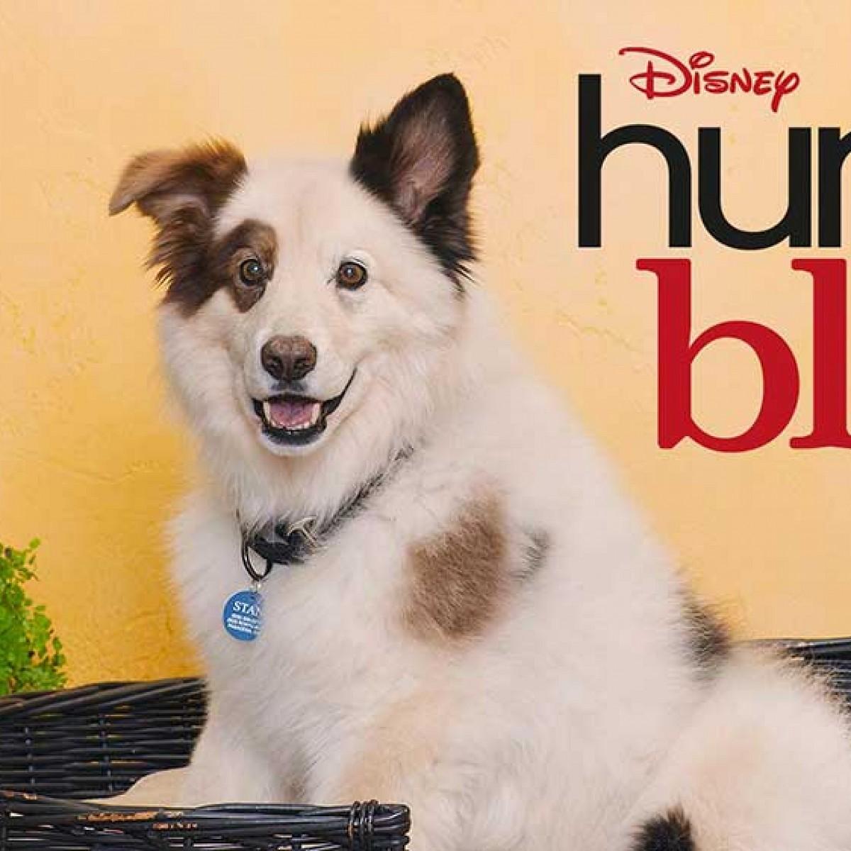 Hund Mit Blog Deutsch Ganze Folgen