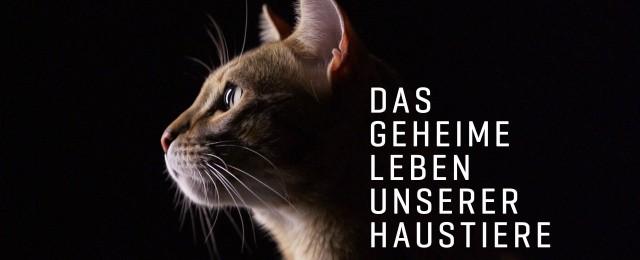 "VOX erforscht ""Das geheime Leben unserer Haustiere"""