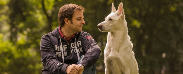 """""""Die Unvermittelbaren"""": Martin Rütter kümmert sich um schwer vermittelbare Hunde"""