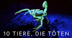 10 Tiere, die töten