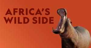 Afrikas wilde Tierwelt