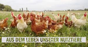 Aus dem Leben unserer Nutztiere