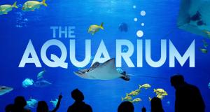 Das Atlanta-Aquarium