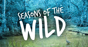 Die Jahreszeiten in der Wildnis