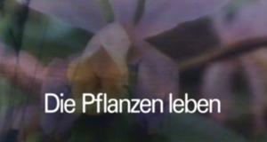 Die Pflanzen leben
