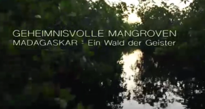 Geheimnisvolle Mangroven