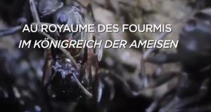 Im Königreich der Ameisen