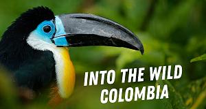 Into the Wild: Kolumbien