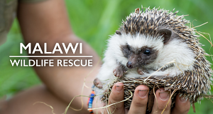 Malawi Wildlife-Rescue